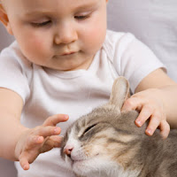 A baby gently touching a happy cat on the head  | Exclusively Cats Veterinary Hospital, Waterford, MI