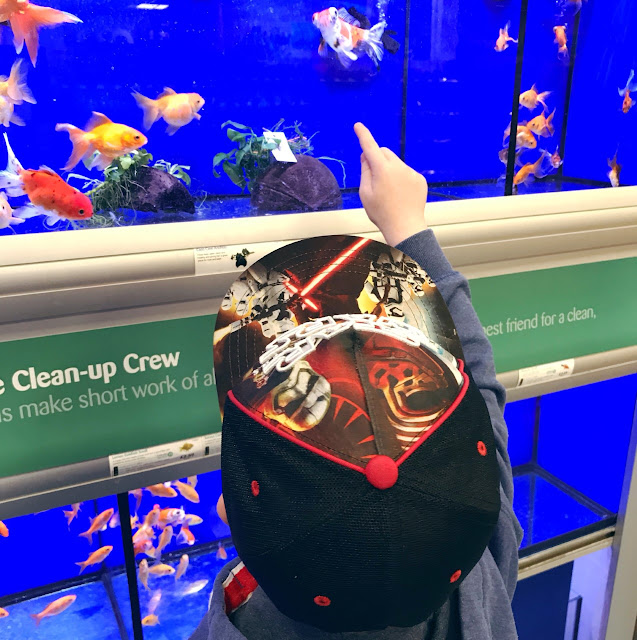 Little boy pointing at the fish in a shop tanl