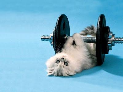 gatto che fa della pesistica