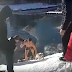 Man Risks His Own Safety To Rescue A Dog From A Frozen Pond