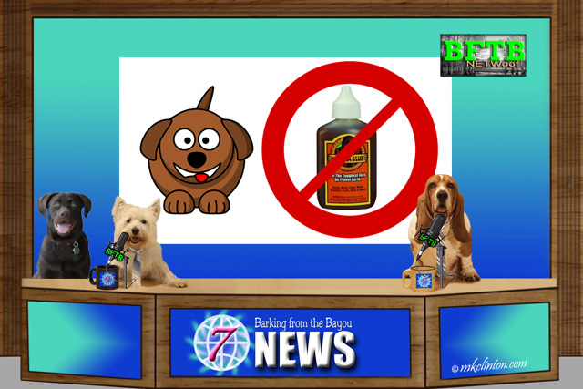 BFTB NETWoof Dog News with dog and Gorilla Glue on back screen