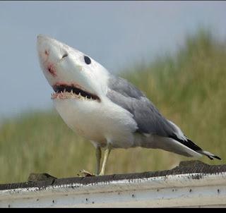 <alt img src='gambar.jpg' width='100' height='100' alt='shark - birds'/>