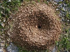Como exterminar las hormigas negras de jardín | Matar hormigas ...