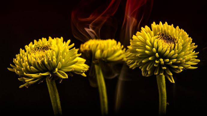 Wallpaper: Smoke and Flowers
