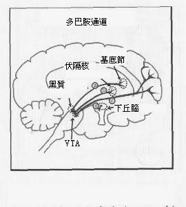 Brain Health: 十二月 2013