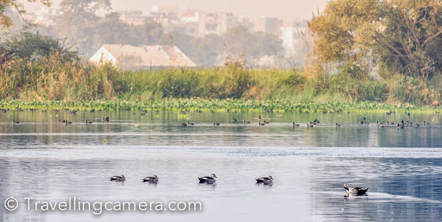 If you are into bird watching, Delhi is a good place to be. Despite its huge human population, concrete structures, and pollution, Delhi still has a good variety of birds. Even though they have become fewer and less audible, you can still find them if you know where to go looking for them. While there are several places you can spot small birds in Delhi, in this post we are going to talk about places you can spot migratory birds and large and small aquatic birds. If you are looking for a weekend, day-long, or a few hour long outing, these are good spots to head to:       Okhla Bird Sanctuary Right next to the Okhla Barrage, at the point where the Mahamaya Flyover begins, there is a spot that you would never suspect could be there. A quiet, green, and secluded Okhla Bird Sanctuary. Though you do occasionally hear some traffic noises, but more or less, it is just nature and you here.       It is the little birds - the sunbirds, the prinias, larks, and robins that greet you at first. At this point, you can spot some waterbirds in the distance. Once you have walked a few hundred meters, you come across the ducks and geese. Some of them are migratory. You walk about a kilometre and half and you come across the watch towers. From here you can witness ducks, storks, and ibises taking flight. And if you are lucky, you may spot a family of blue bull (neel gai) making their way across the swamp.       A few years back, you could take your car inside the sanctuary, but now that is not possible. Now you need to park your car at the nearby metro station and walk towards the sanctuary. That can be a pain because it is a fairly long walk between the entrance gate and the watch tower and there is another exit near the watch tower. The prospect of walking all the way to the entrance gate then looks like a difficult and unnecessary task. It is better to take a cab both ways.       Okhla Bird Sanctuary, though beautiful, seems increasingly suffocated year by year and that also reflect