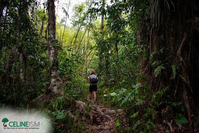 apayao dipterocarp forest