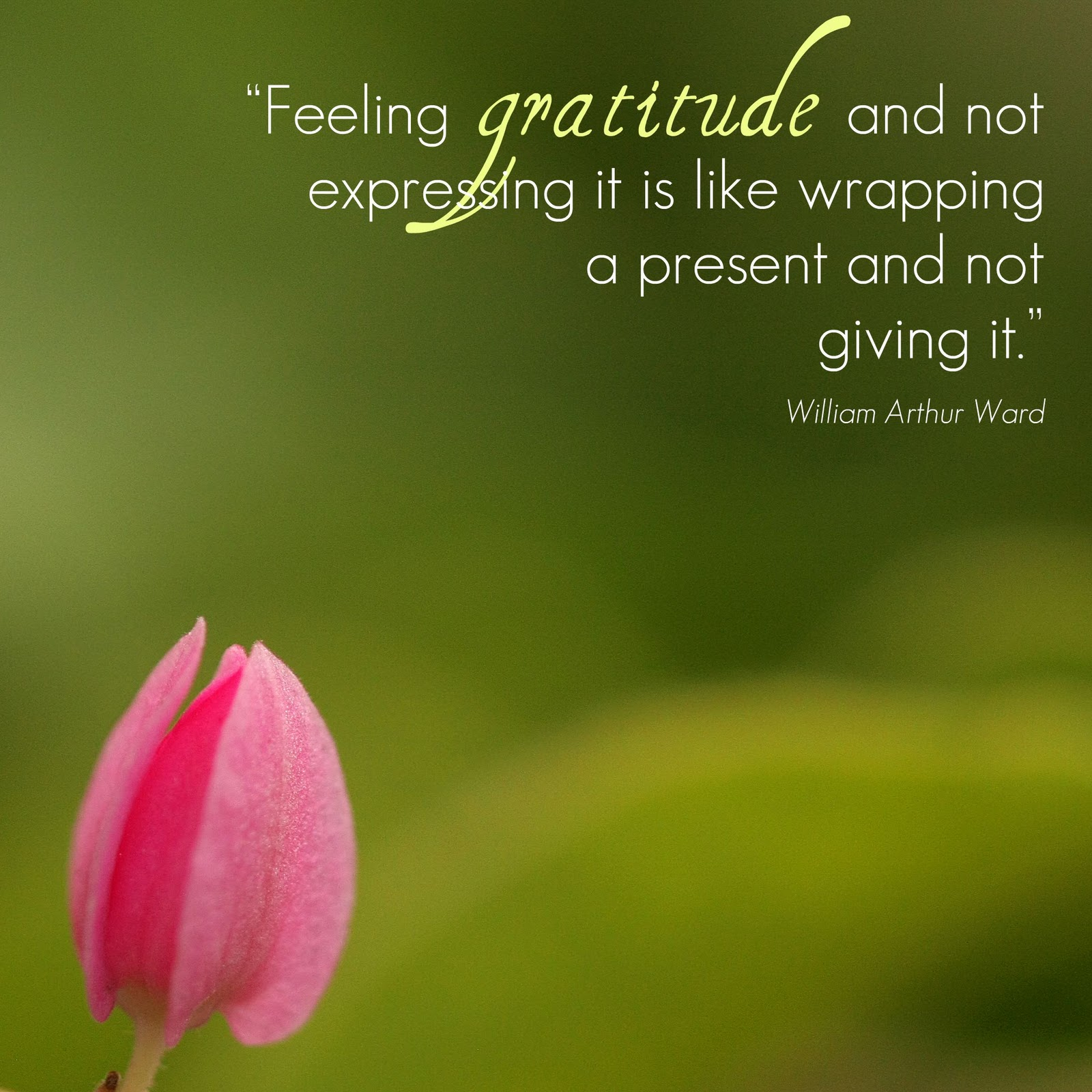 Expressing Quotes: Quotes Expressing Appreciation And Thanks