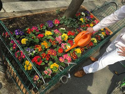 Viele bunte Blumen, weißgekleideter Herr mit bunter Plastikgießkanne