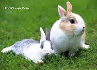 Rabbit's nonsense: Hindi Best Story for Child, Hindi Best Stories Blog Hindi Chowk  खरगोश की नादानी