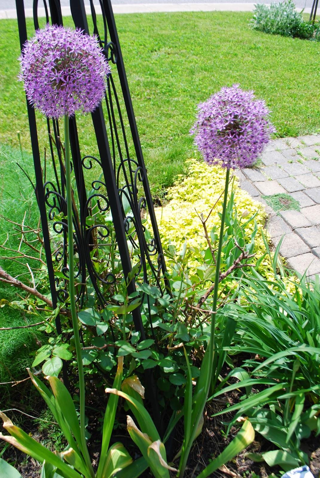 3 jardins au qu bec qui a peur de planter des bulbes dans son jardin - Quand planter bulbes tulipes ...