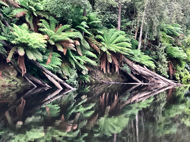 Fernglade Reserve Tasmania