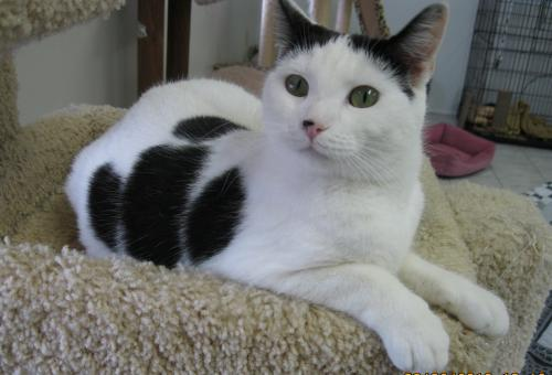 Helen is a adoptable cat in Ky