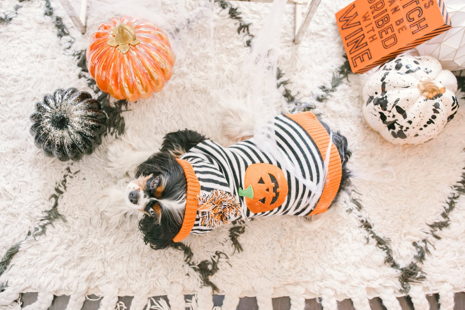 Bijuleni - How to Decorate Your Living Room for Halloween - Cavalier King Charles Spaniel