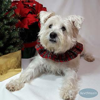 Red Royal Stewart Tartan Plaid Dog Scrunchie Ruffle