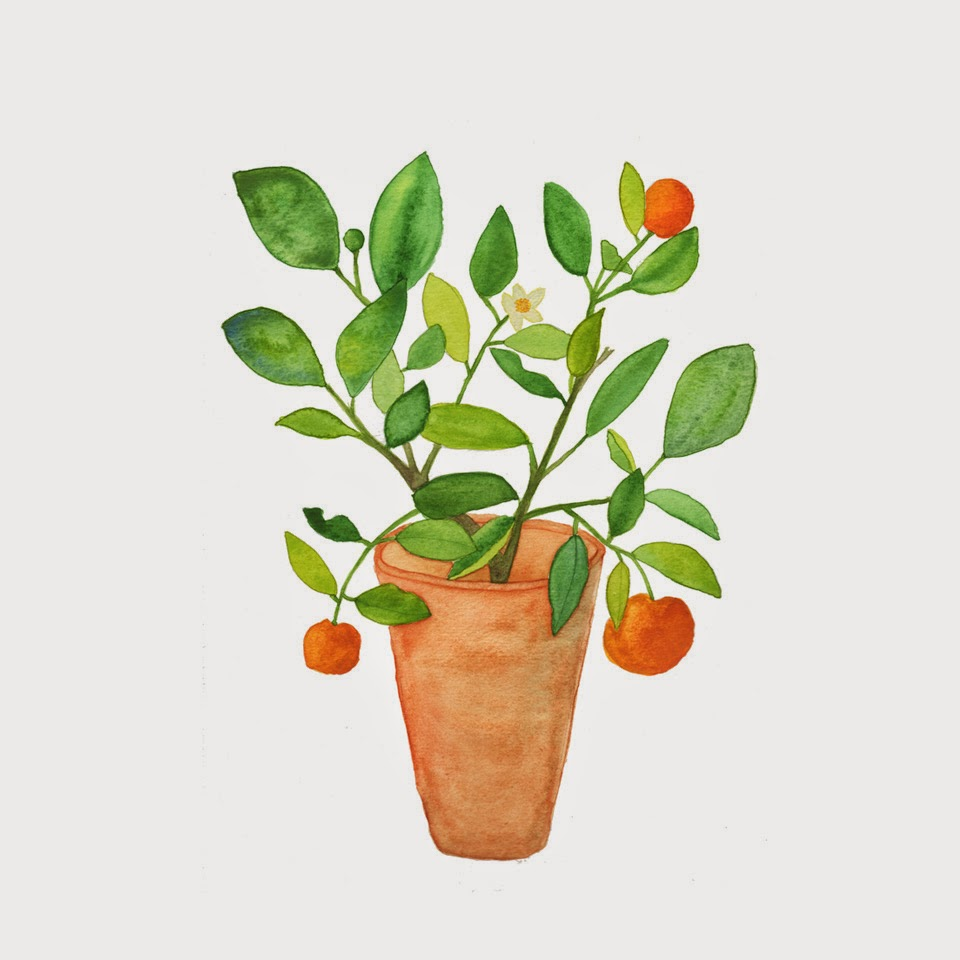 watercolor painting calamondin orange tree houseplant portrait