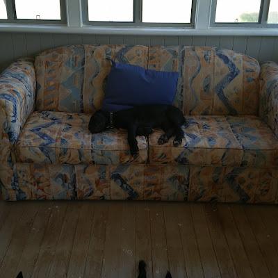 eight acres: raising a big dog vs a working dog