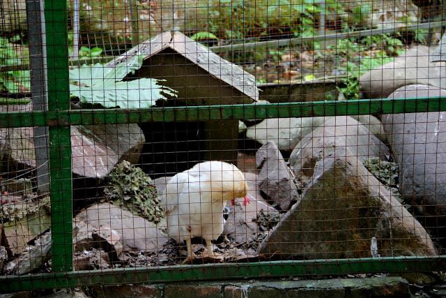 新北市淡水 親子景點 淡江農場