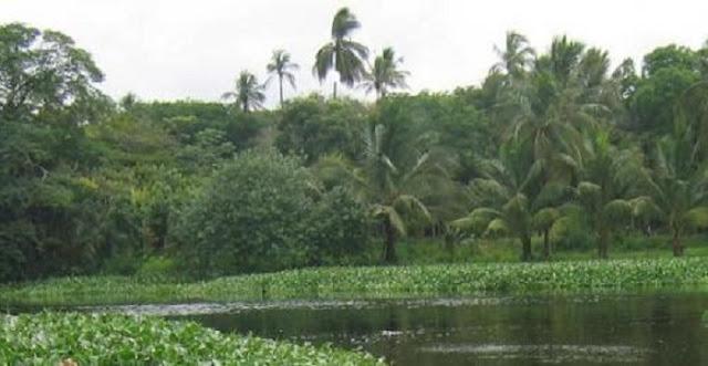 Yunes aprueba construcción en Zona Natural Protegida que ni el corrupto de Duarte tocó