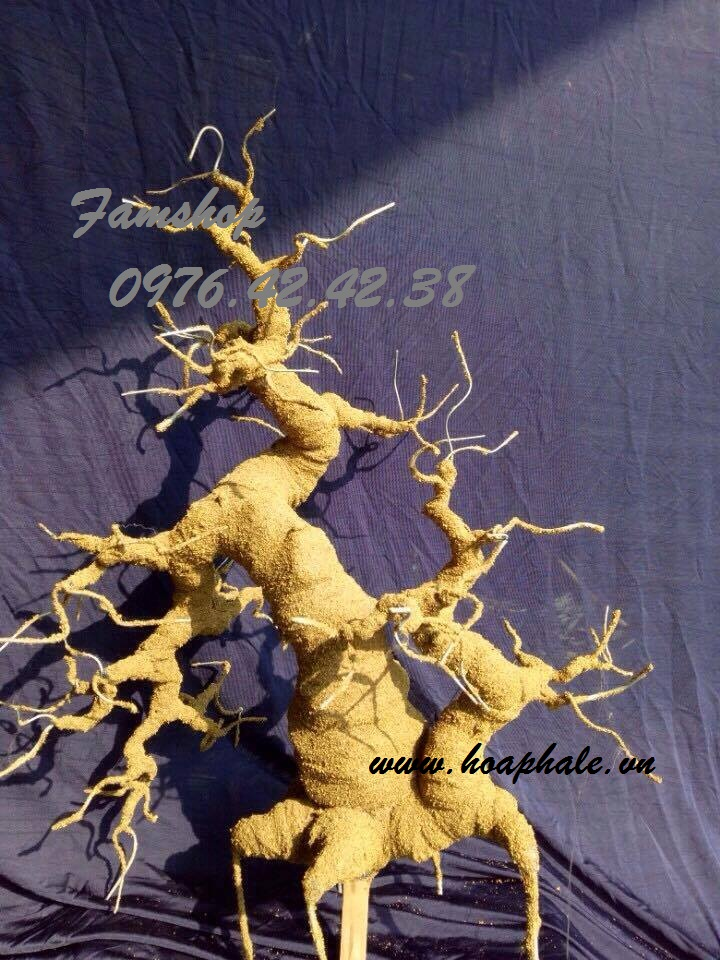 Goc bonsai mai dao the doi o Nguyen Cao