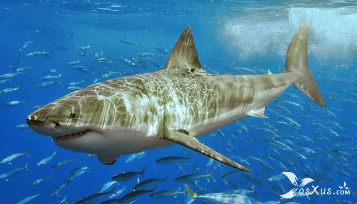 14 Ikan Terbesar di Dunia Yang Masih Hidup Sampai Saat Ini