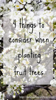 4 things to consider before planting a homestead orchard