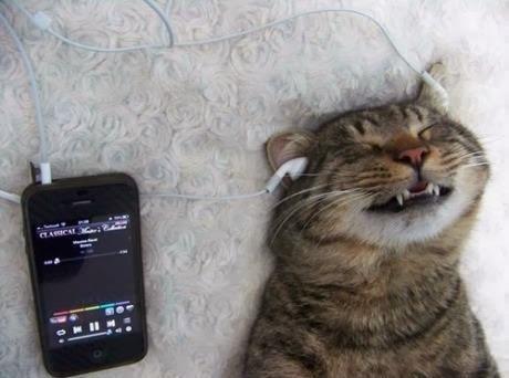 Hình ảnh hài hước nhất về mèo 2014