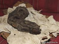 38 centis ujjat találtak Egyiptomban: Bizonyíték a nephilimek létezésére?