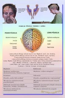 mózg męskość żeńskość