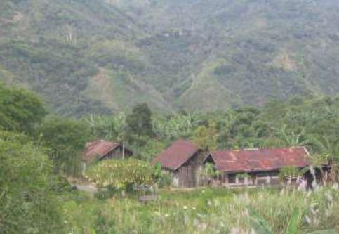 gambar perkampungan penduduk disekitar kebun kopi daerah Gayo