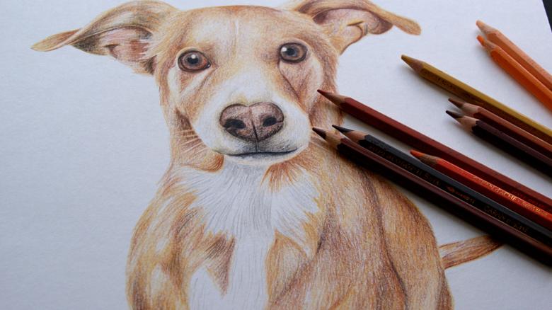 la chica de la cinta, una ilustradora que atrapa las almas de los animales