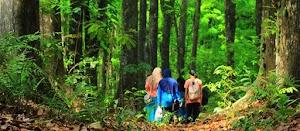 Yuk! Datang ke 3 Objek Wisata Hutan Terpopuler Di Lombok