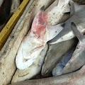 Di Karawang, Ikan Hiu di Jual di Tempat Pelelangan Ikan Sungai Buntu