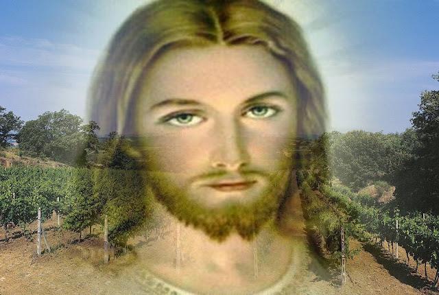 """Gesu'di Nazareth: """"IO SONO LA VITE E VOI I TRALCI"""" V^DOMENICA DI ..."""