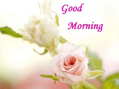 rose flower good morning image for whatsapp friends