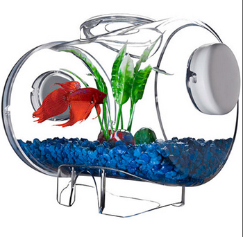 Model Akuarium Modern Untuk Ikan Cupang Hias Dunia Akuarium