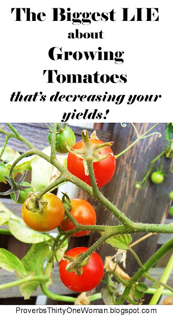 The biggest myth about growing tomatoes