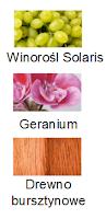 Winorośl Solaris, Geranium, Drewno bursztynowe