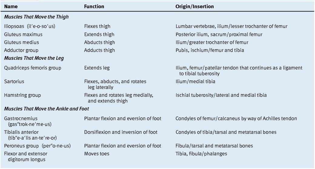 Mini Handbooks: Hip and Lower Limb Muscles
