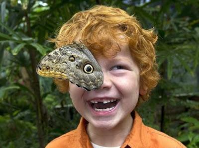 butterfly landing on eye