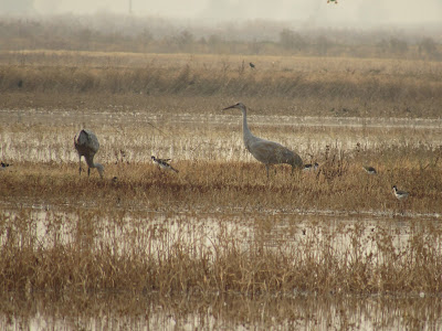 Colusa National Wildlife Refuge California birding hotspot