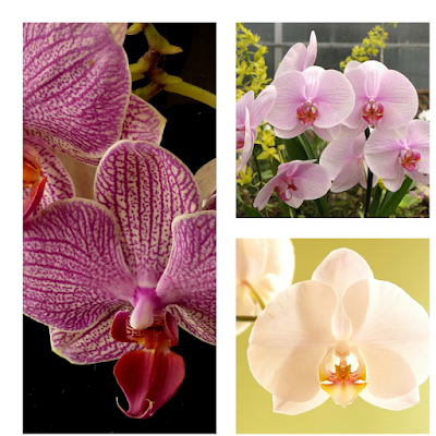 review this orchid care and tips
