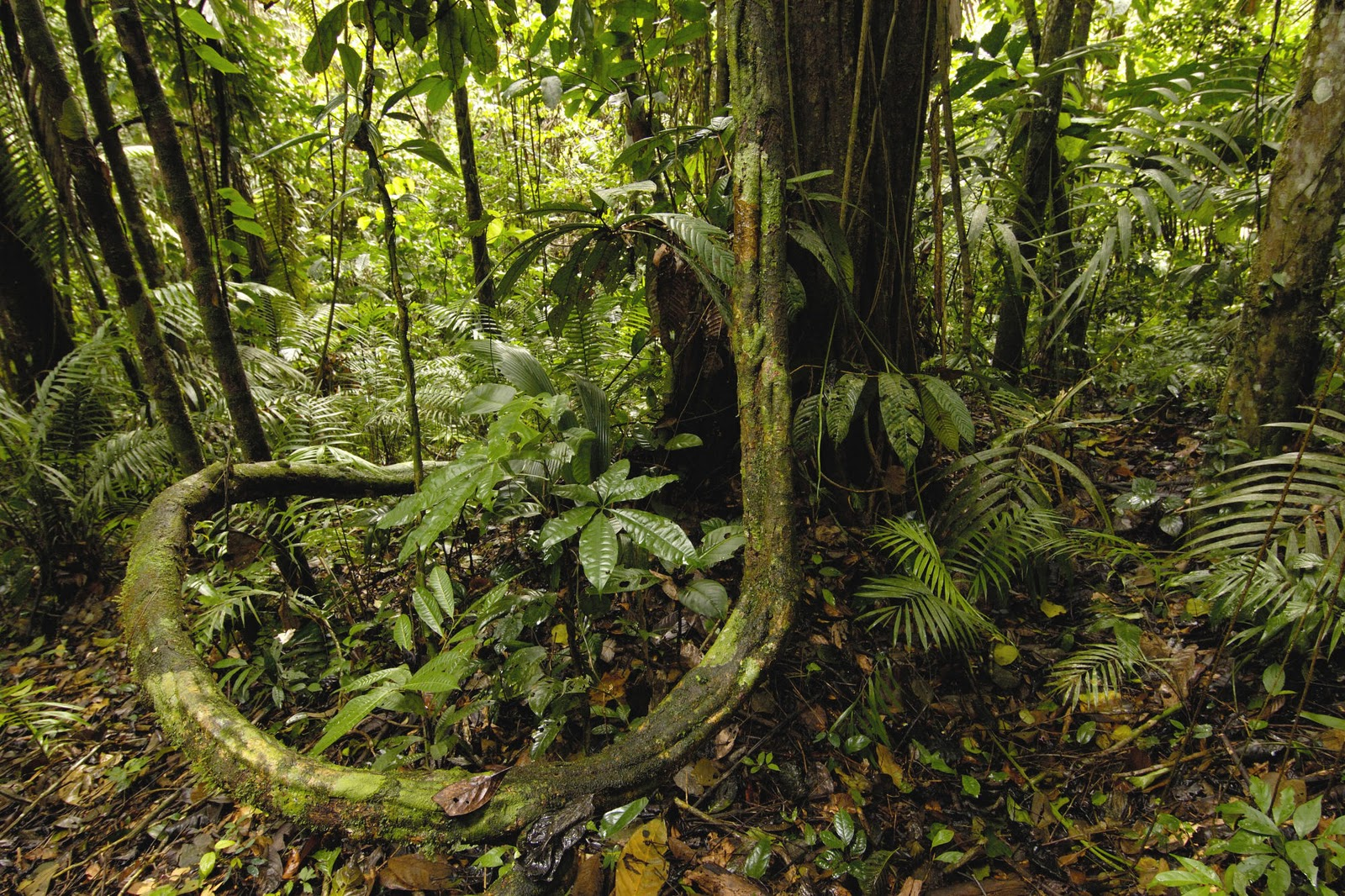 Interesting collection amazing amazon - Amazon rainforest animals wallpaper ...