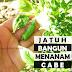JATUH BANGUN MENANAM CABE
