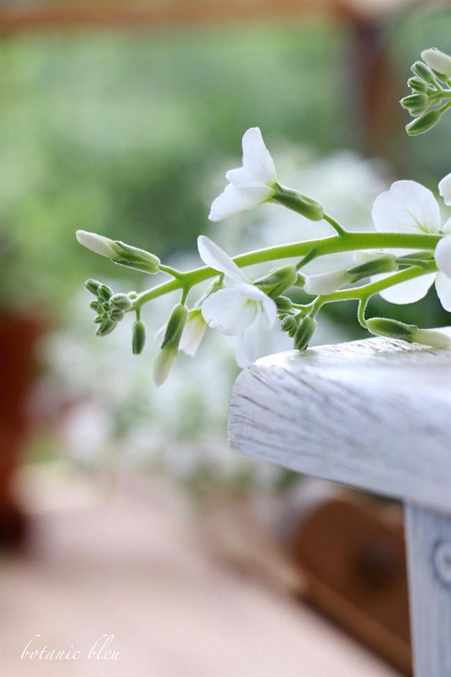 stock-flower-stem