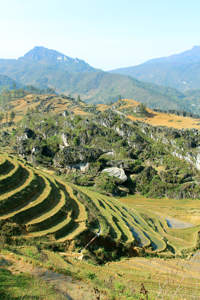 Terraced rice fields in Sapa, Vietnam - travel blog
