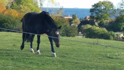 Pferd in Vitt
