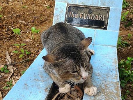 В Индонезии кот больше года живет на могиле хозяйки