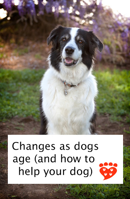 Changes dogs age (and how to help your senior dog). Training, tooth-brushing, and helping dogs cope with traumatic events are all  important