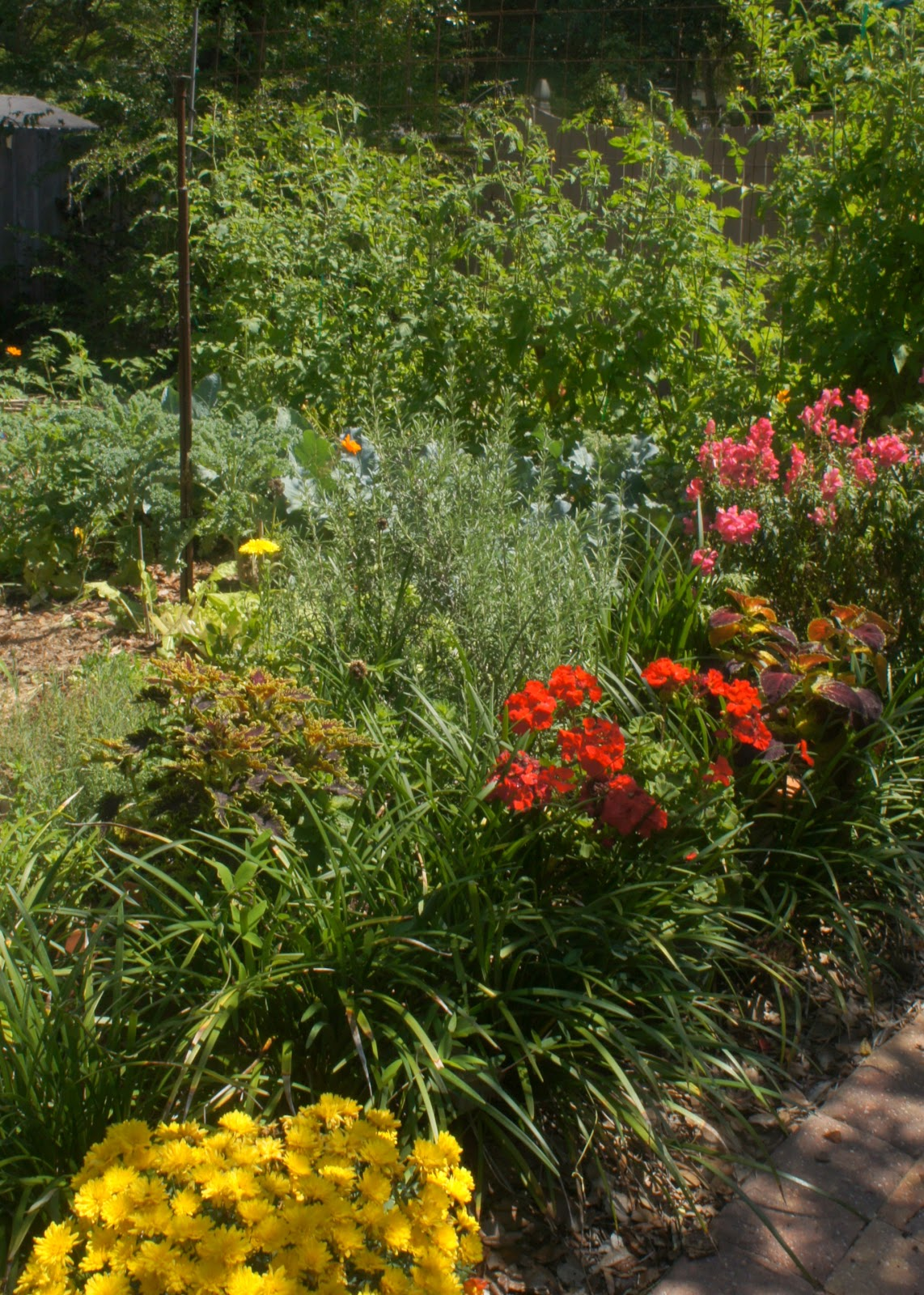Mays Garden: Gardening In Central Florida: May In The Central Florida